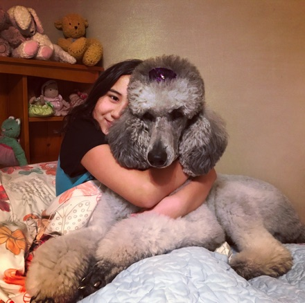 Silver standard poodle, Jade, being hugged by my daughter.