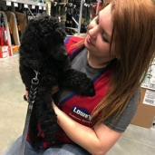 Moyen poodle puppy, Anise, being held my a Lowe's employee